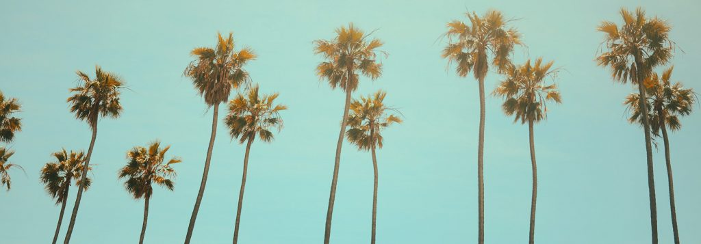 Image of palm trees.