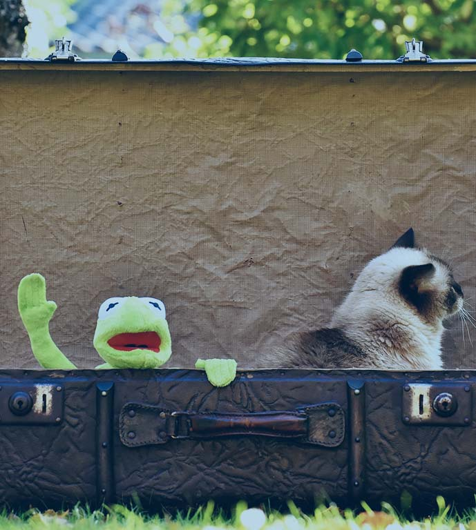 Kermit the Frog waving goodbye inside a suitcase next to a cat